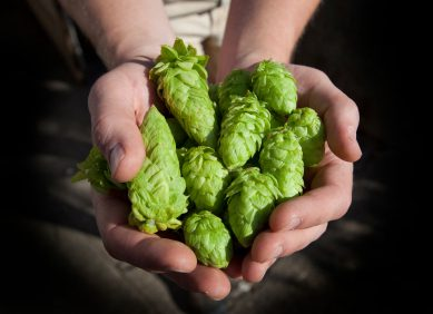 Q&A with Hops Farmer Jason Perrault