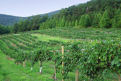 southern wineries