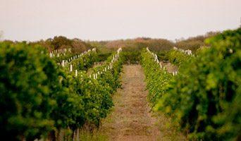 texas wine scene