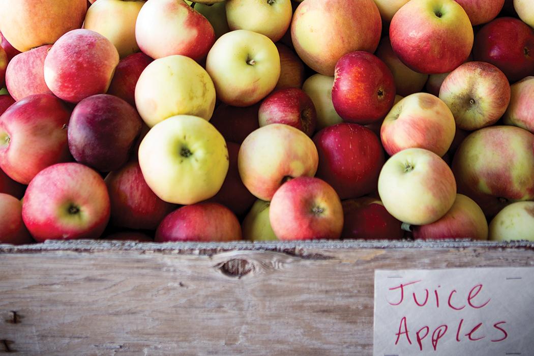 cider-apples-kiyokawa-orchard-crdt terry manier