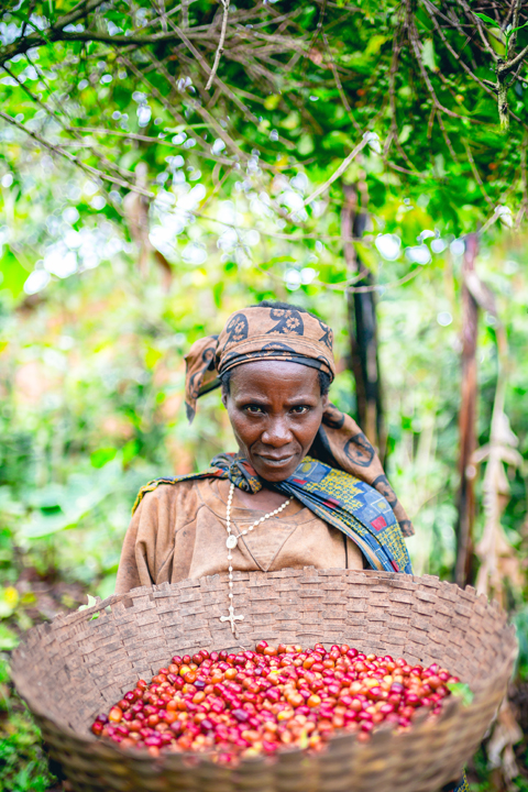 One day, on a walk from the village of Bukeye to the Long Miles washing station, the Carlson family met Sylvia. She's been delivering her coffee to their washing station since it opened in 2013.