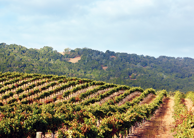 Brecon Estate Winery