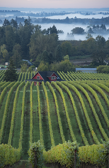 The surrounding Dundee Hills in the Willamette Valley provided inspiration for the overall design, as well as pastoral views from the tasting room.