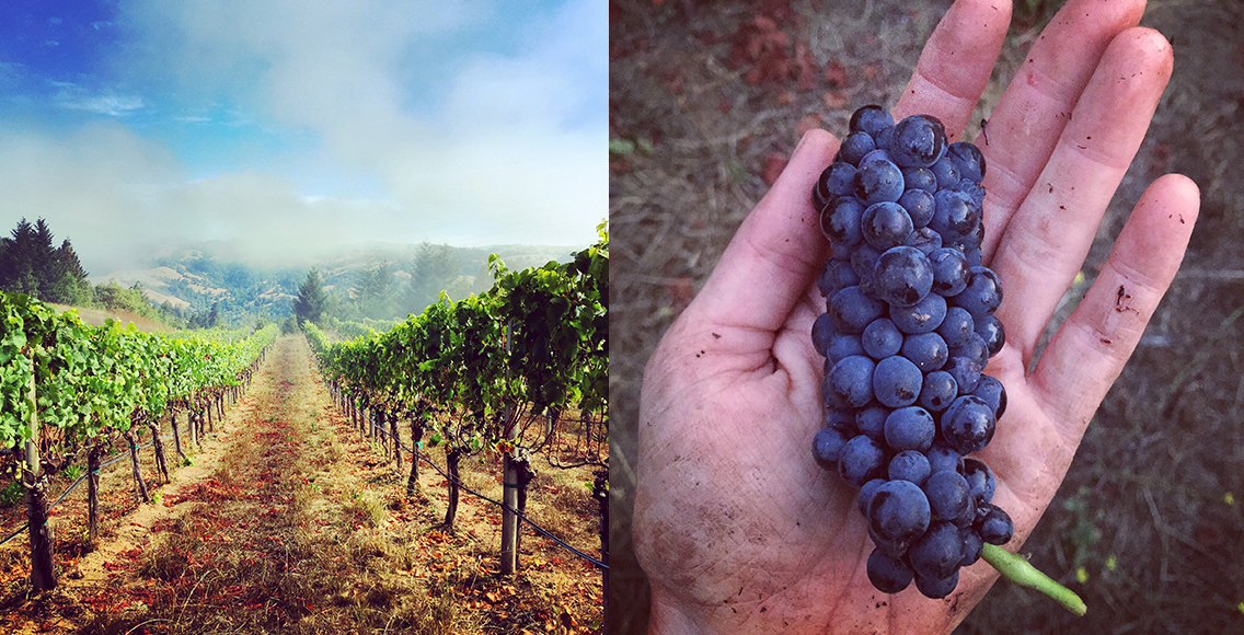The Hirsch Vineyards feed is managed by owner Jasmine Hirsch. With images of the lush California landscape, their feed is one of the most beautiful. | Follow them at @hirschvineyards.