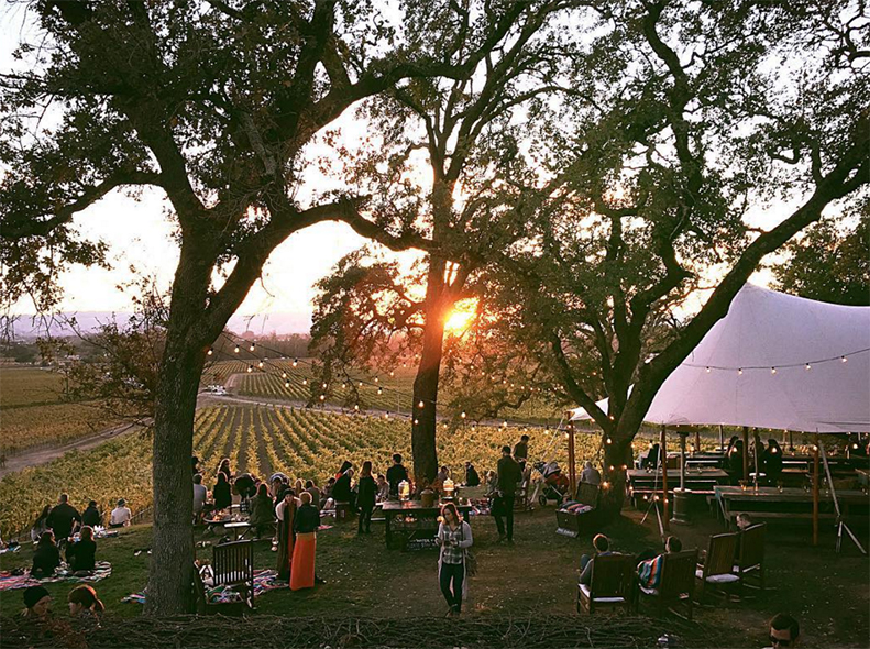 Scribe Winery's feed is filled with images of special events, fresh produce and glistening glasses of vino. | Follow them at @scribewinery.