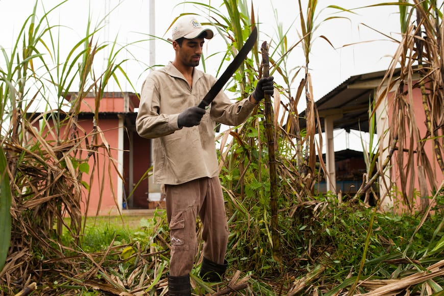 Hand-cutting sugarcane with a machete near Morretes.