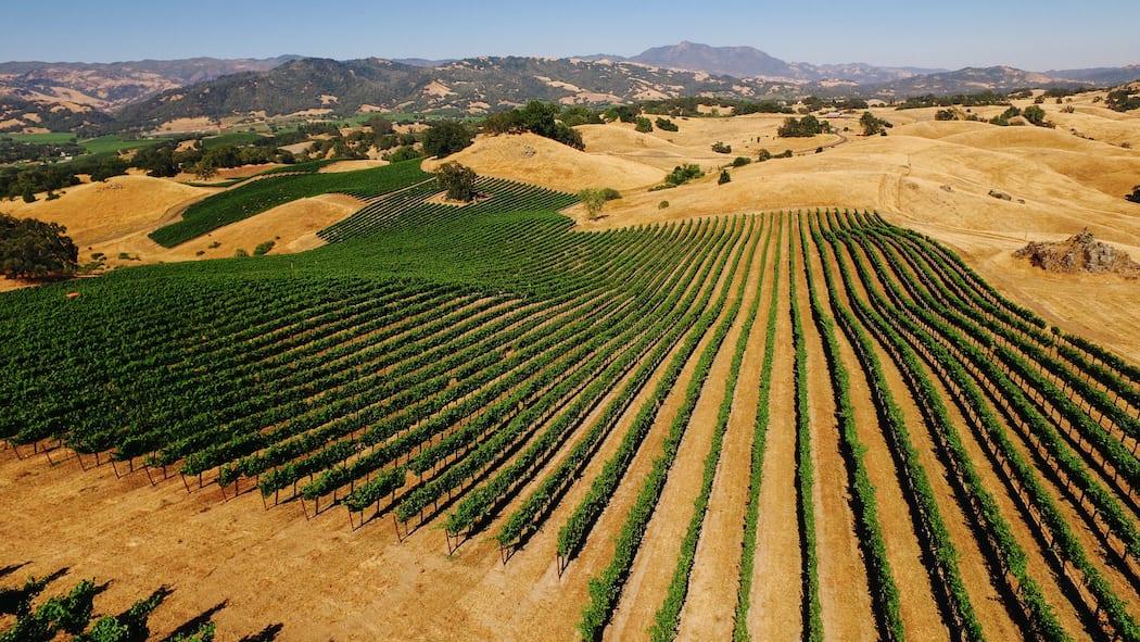 West Coast Winemaking