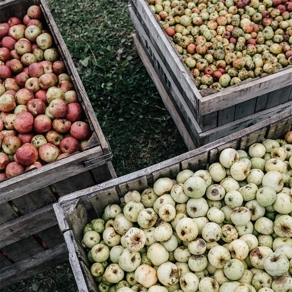 Behind-the-scenes shots like this one from Shacksbury Cider capture the mood of the harvest in Vermont. For more apple cider goodness, follow them at @shacksbury. Photo by Michael Tallman.