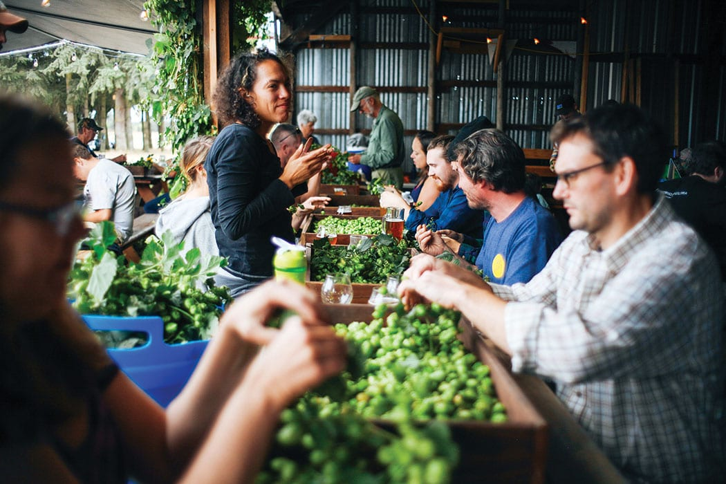 Sorting hops at Agrarian Ales. | Photo by Trask Bedortha.
