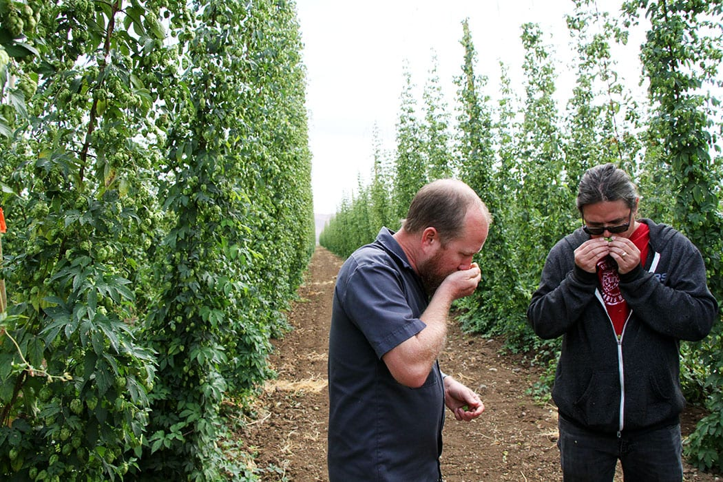 Fourth-generation hop breeder Jason Perrault (L) evaluates some fresh-picked hops with Founders Brewing head brewer Jeremy Kosmicki.
