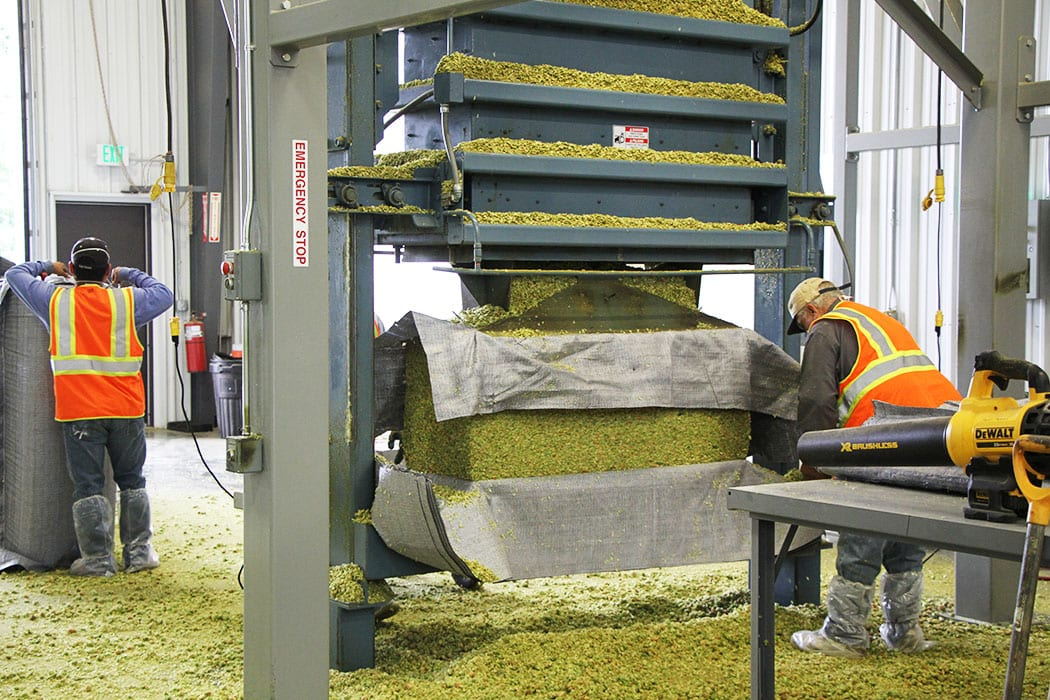 In many cases, the hops are packaged into large bales.