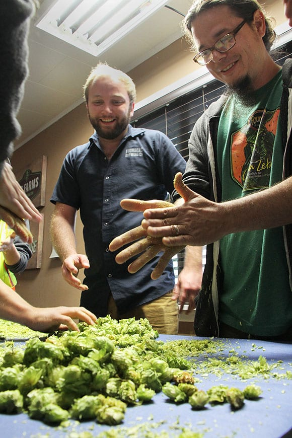 To select which hops they prefer to order for the year, brewers crush and rub hops between their palms to extract the aromatic oils inside.