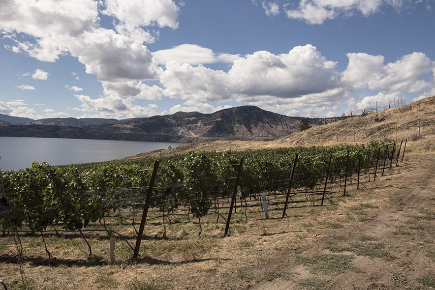 The Okanagan Valley has low rainfall and humidity, beautiful rolling hills and abundance of volcanic and glacial soil. | Photo by Nic Lehoux.