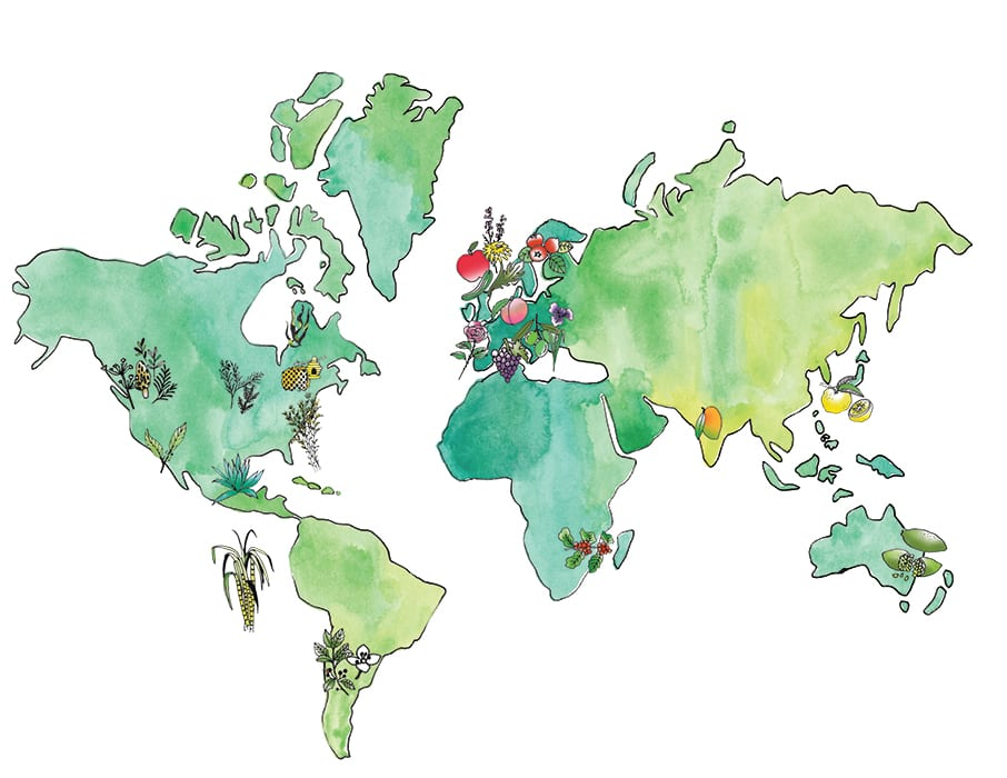 TRACING GIN'S GLOBAL DIASPORA