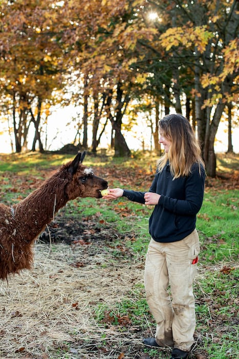 All of the llamas and alpacas are named Michael.
